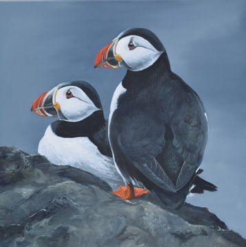 'Two Puffins on a rock'