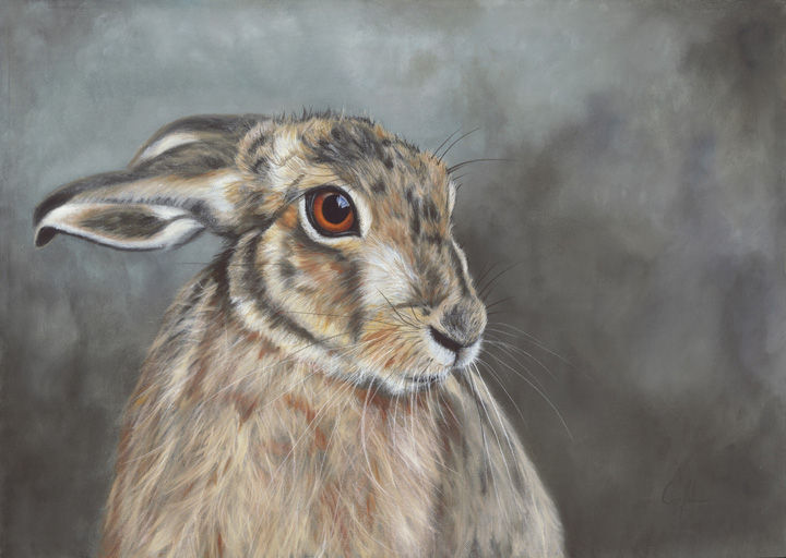'Handsome Hare'