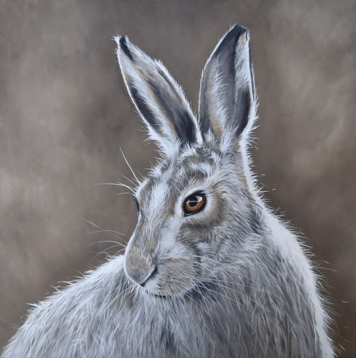 'Mountain Hare'